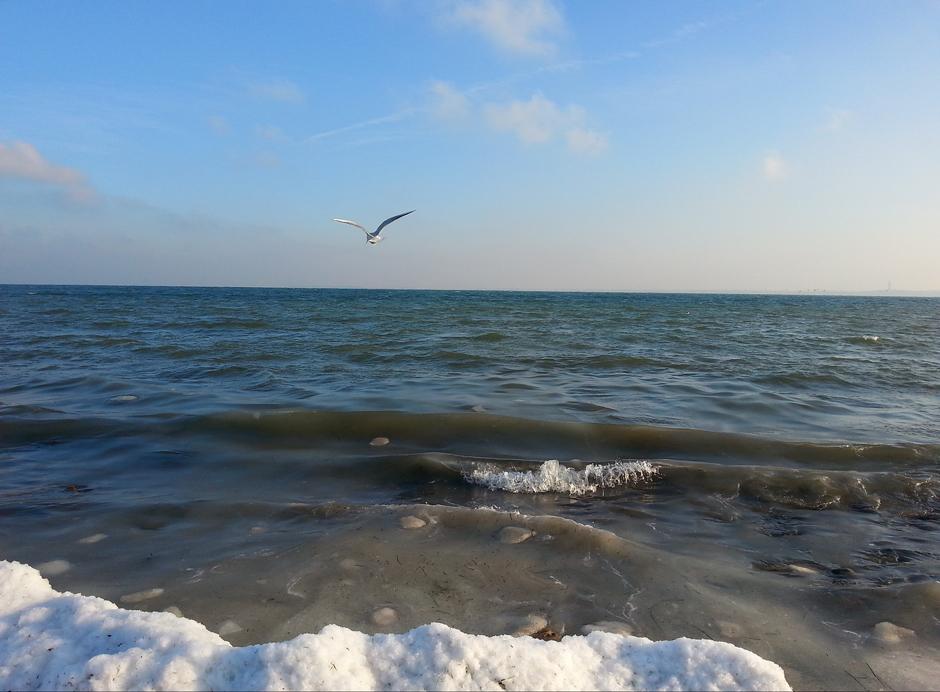 WinterMöwe