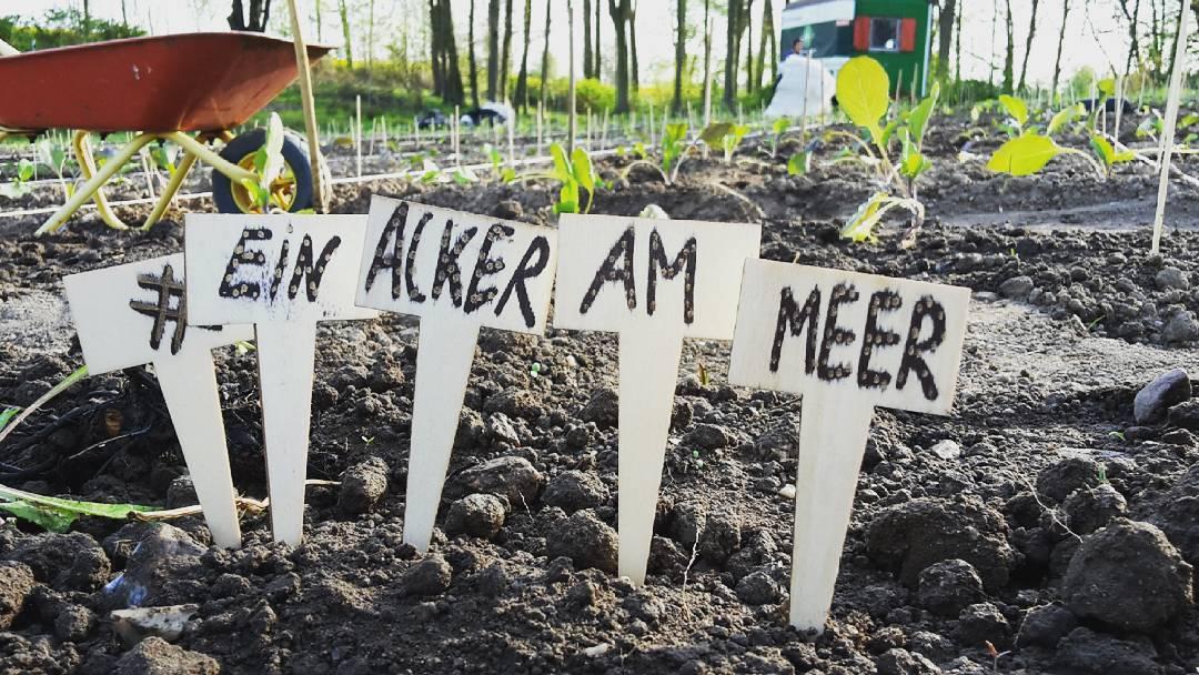 Gestern ging es los-die eingesäten Beete wurden an ihre fleißigen (hoffentlich - wir fahren nämlich erstmal in den Urlaub ) Gärtner übergeben. Projekt #einackerammeer läuft. Mehr zum erdigen Start bei Sonnenschein morgen auf Kiel am Nil. . . . #kielamnil #kiel #igerskiel #gutbirkenmoor #schwedeneck #landleben #kartoffel #zuchini #karotte #undsoweiter #gemüseanbau #ackerei #bauernhof #familie #projekt #comeseesh #schleswigholstein