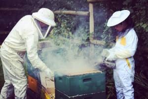 Wo Kinder zu Bienenflsterern werden drfen der AWO Kinderbauernhof inhellip
