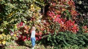Der Herbst auf diesem Bild ist bereits eine Woche althellip