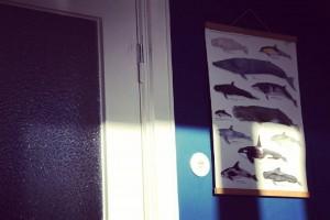 Wale wohin man sieht    kielamnil kiel igerskielhellip