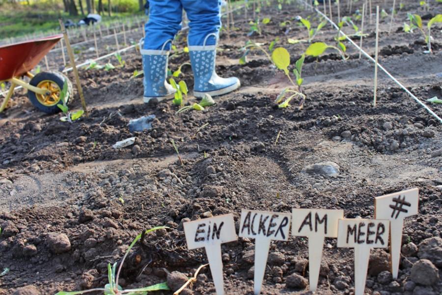 KaN_Ein AckerAmMeer_GutBirkenmoor_Mai_Foto_(c)www.kielamnil.de
