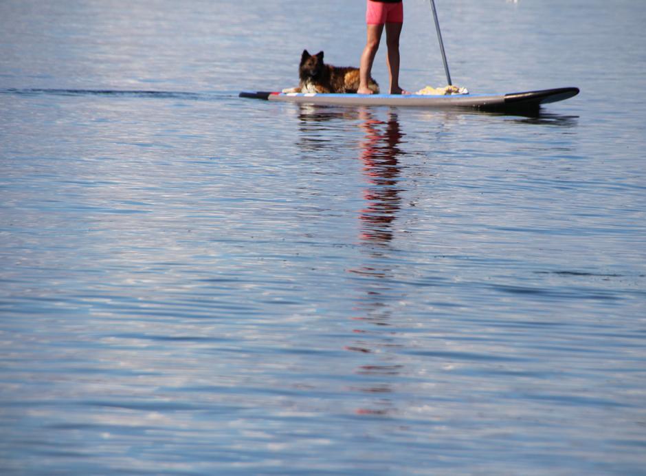 KaN_Grönwohld_Strand_StandUp_Hund_2_Foto_(c)www.kielamnil.de